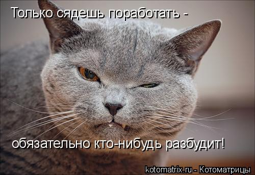 Котоматрица: Только сядешь поработать -  обязательно кто-нибудь разбудит!