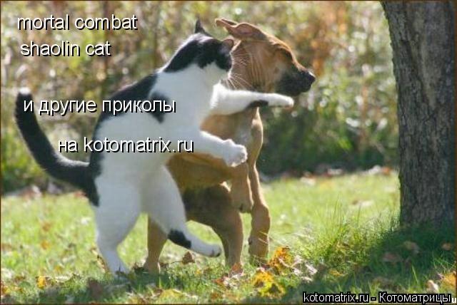 Котоматрица: mortal combat shaolin cat и другие приколы на kotomatrix.ru