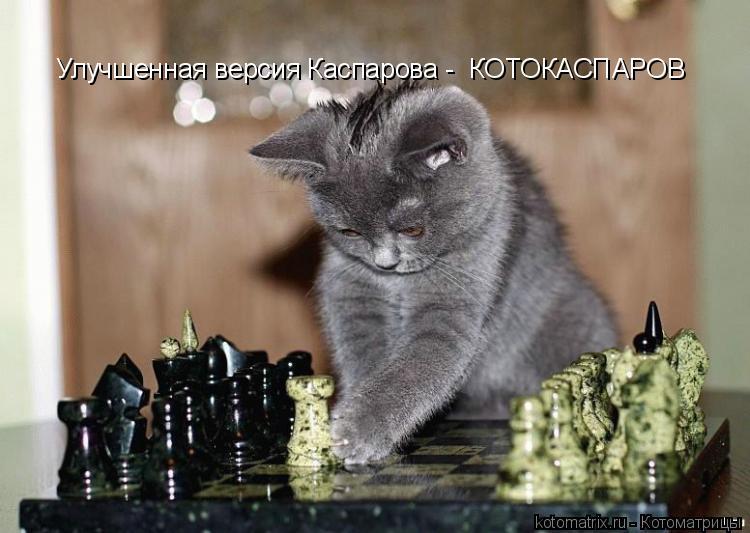 Котоматрица: Улучшенная версия Каспарова -  КОТОКАСПАРОВ