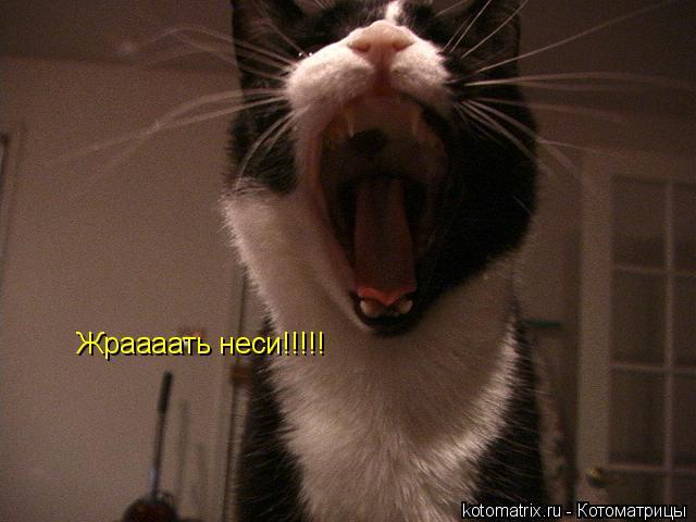 Котоматрица: Жраааать неси!!!!!
