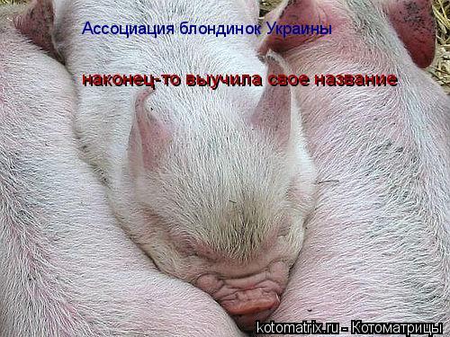 Котоматрица: Ассоциация блондинок Украины  наконец-то выучила свое название