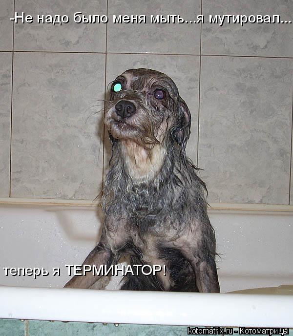 Котоматрица: -Не надо было меня мыть...я мутировал... теперь я ТЕРМИНАТОР!