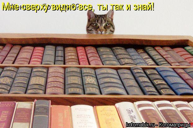 Котоматрица: Мне сверху видно все, ты так и знай!