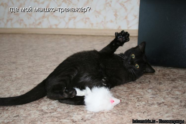 Котоматрица: где мой мышко-тренажёр?