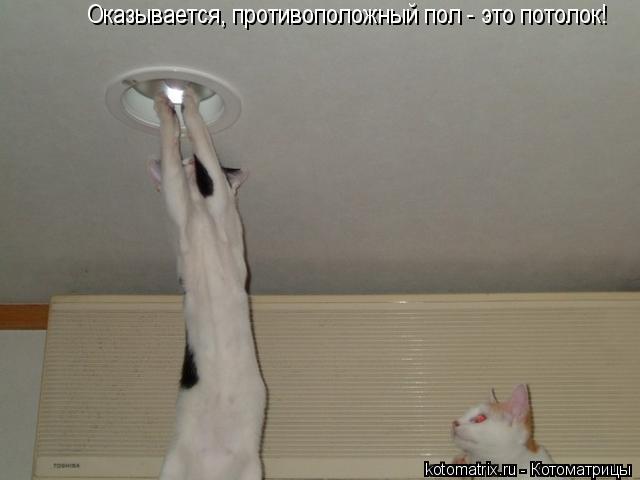 Котоматрица: Оказывается, противоположный пол - это потолок!