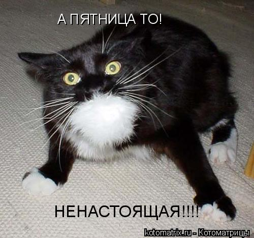 Котоматрица: А ПЯТНИЦА ТО! НЕНАСТОЯЩАЯ!!!!