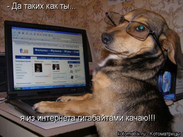 Котоматрица: - Да таких как ты... я из интернета гигабайтами качаю!!!
