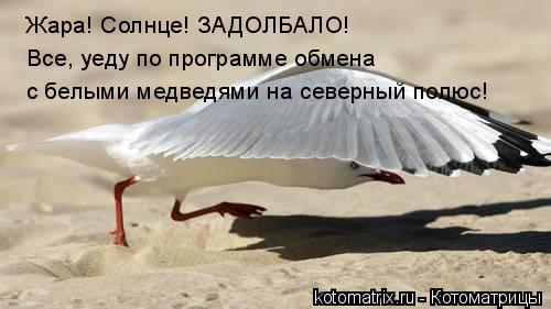 Она к медведям, а Sintal в Крым!