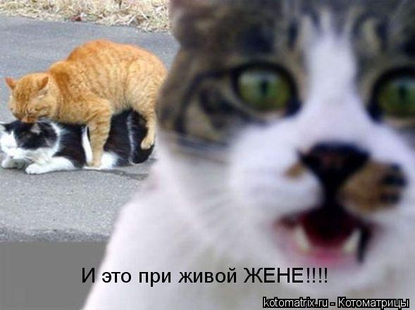 Котоматрица: И это при живой ЖЕНЕ!!!!