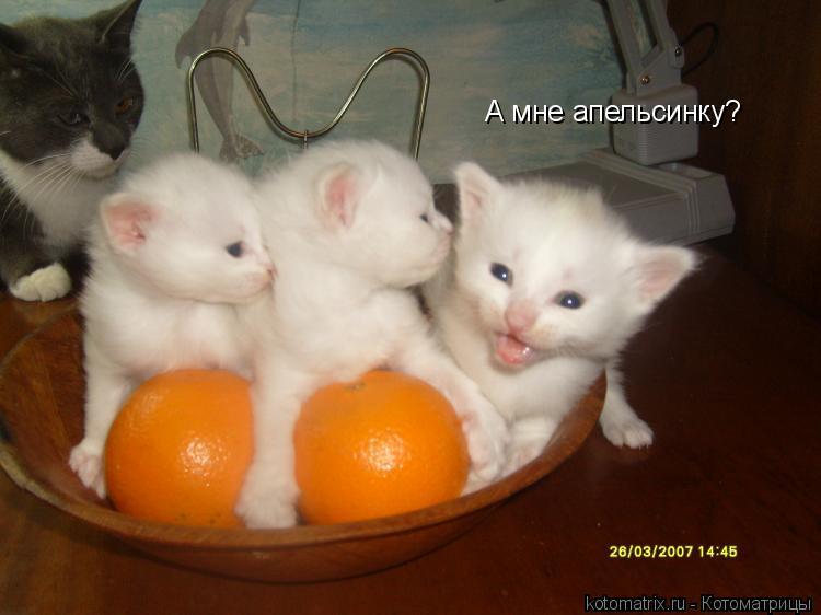 А мне апельсинку?