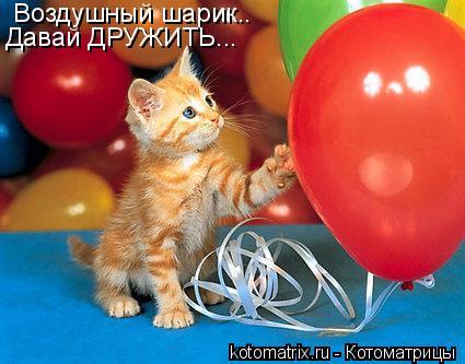 Котоматрица: Воздушный шарик.. Давай ДРУЖИТЬ...