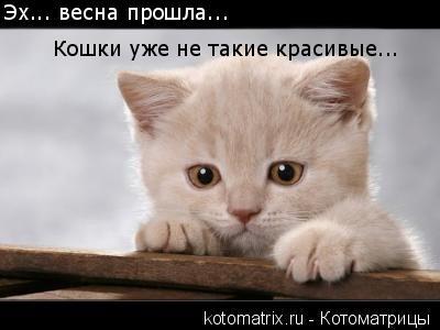 Котоматрица: Эх... весна прошла...  Кошки уже не такие красивые...
