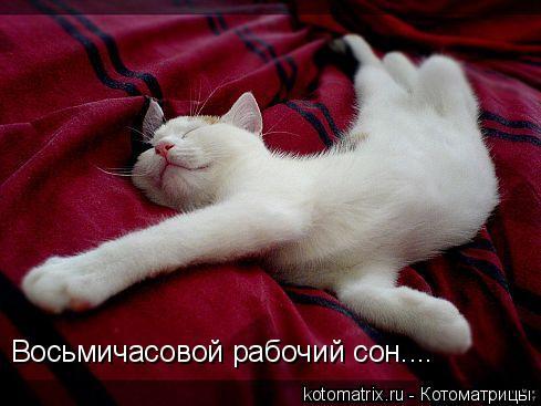 Котоматрица: Восьмичасовой рабочий сон....