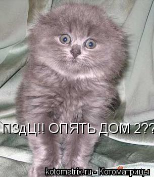 Котоматрица: ПЗдЦ!! ОПЯТЬ ДОМ 2???!!!!!