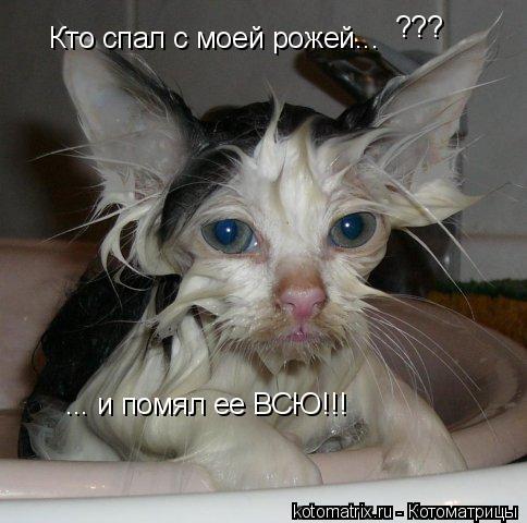 Котоматрица: Кто спал с моей рожей... ??? ... и помял ее ВСЮ!!!