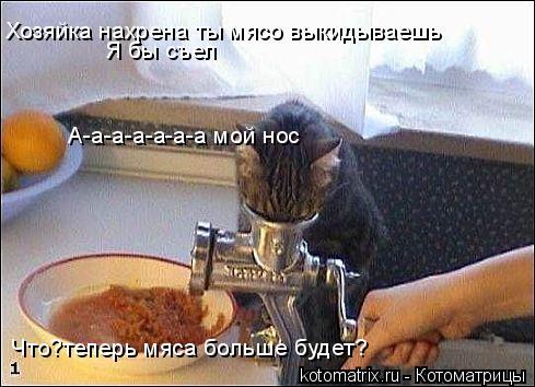 Котоматрица: Хозяйка нахрена ты мясо выкидываешь Я бы съел А-а-а-а-а-а-а мой нос Что?теперь мяса больше будет?