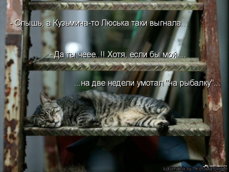 """Котоматрица: - Слышь, а Кузьмича-то Люська таки выгнала... - Да ты чеее..!! Хотя, если бы мой ... ...на две недели умотал """"на рыбалку""""..."""