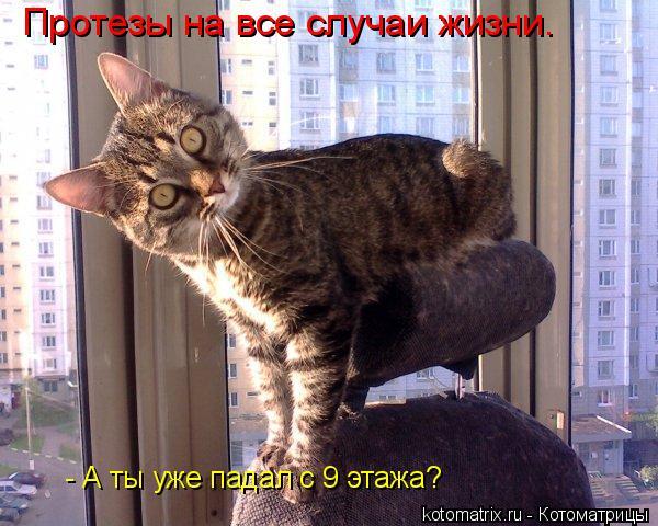 Котоматрица: Протезы на все случаи жизни. - А ты уже падал с 9 этажа?