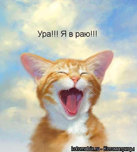 Котоматрица: Ура!!! Я в раю!!!