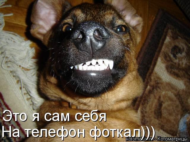 Котоматрица: Это я сам себя  На телефон фоткал)))