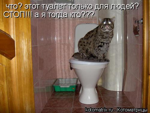 Котоматрица: что? этот туалет только для людей? СТОП!!! а я тогда кто???