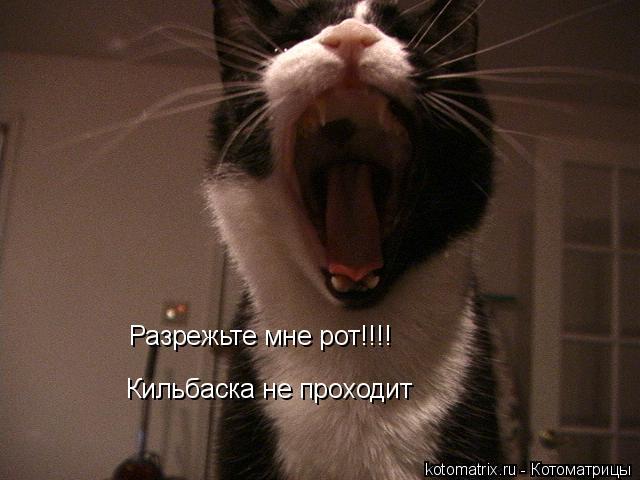 Котоматрица: Разрежьте мне рот!!!!  Кильбаска не проходит