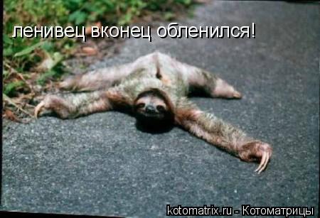 Котоматрица: ленивец вконец обленился!