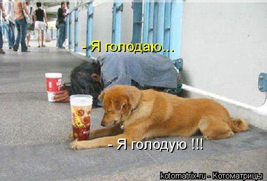 Котоматрица: - Я голодаю... - Я голодую !!!