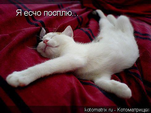 Котоматрица: Я есчо посплю...