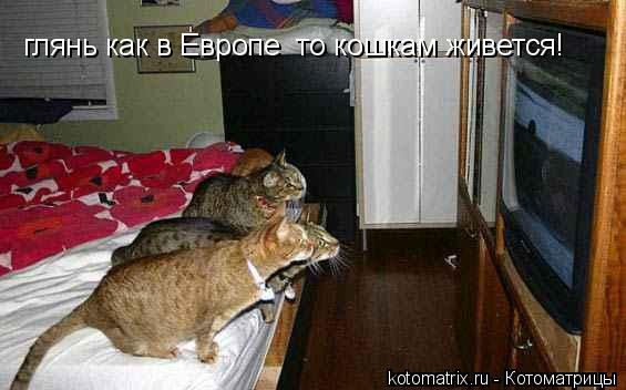 Котоматрица: глянь как в Европе  то кошкам живется!