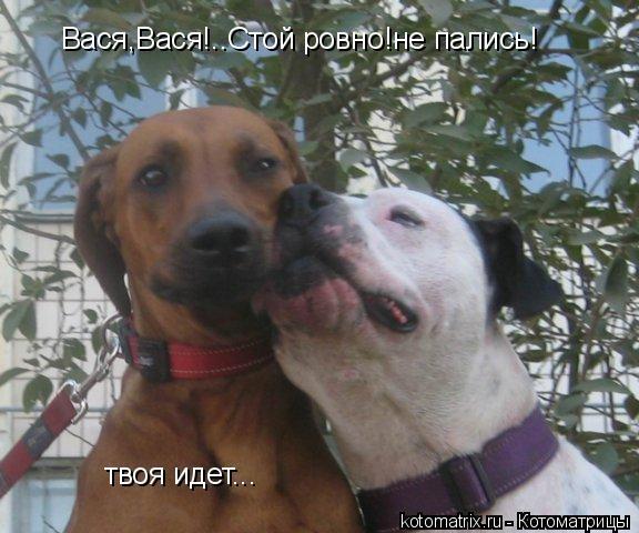 Котоматрица: Вася,Вася!..Стой ровно!не пались! твоя идет...