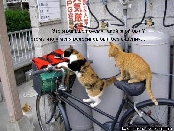 Котоматрица: - Это я раньше почему такой злой был? Потому что у меня велосипед был без сидения...
