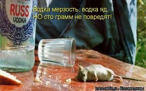 Котоматрица: Водка мерзость, водка яд,  НО сто грамм не повредят!