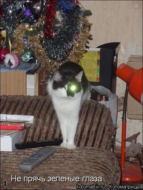 Котоматрица: Не прячь зеленые глаза