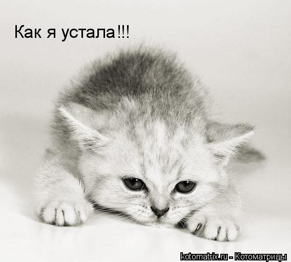 Котоматрица: Как я устала!!!
