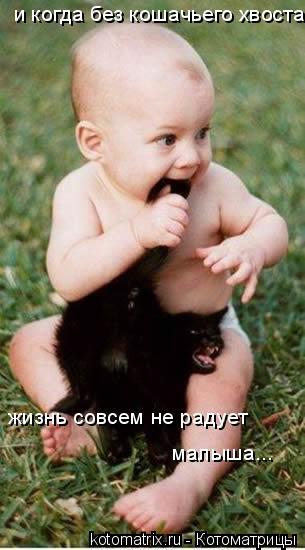 Котоматрица: и когда без кошачьего хвоста жизнь совсем не радует малыша...
