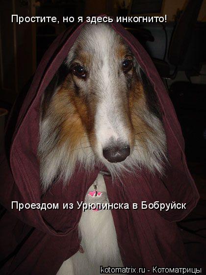 Котоматрица: Простите, но я здесь инкогнито! Проездом из Урюпинска в Бобруйск