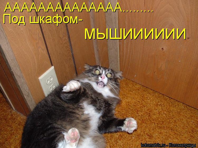 Котоматрица: АААААААААААААА......... Под шкафом- МЫШИИИИИИ