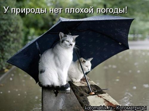 Котоматрица: У природы нет плохой погоды!