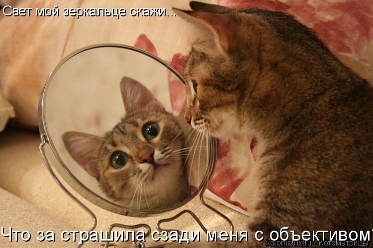 Котоматрица: Свет мой зеркальце скажи... Что за страшила сзади меня с объективом???