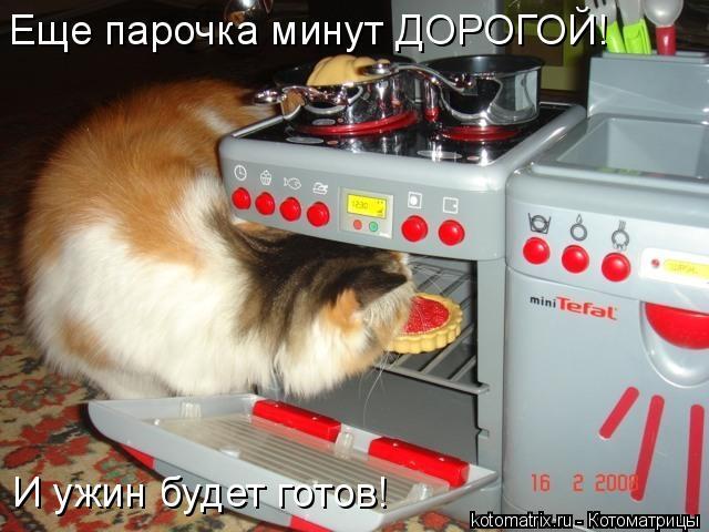 Котоматрица: Еще парочка минут ДОРОГОЙ! И ужин будет готов!