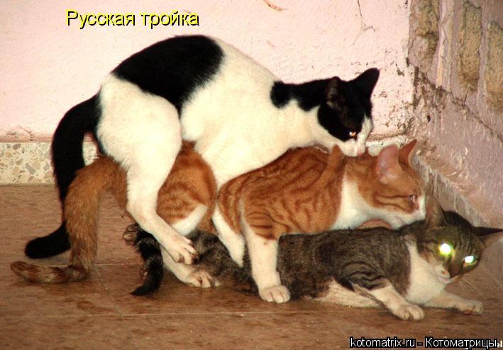 Котоматрица: Русская тройка