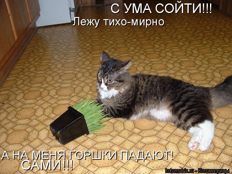 Котоматрица: С УМА СОЙТИ!!! Лежу тихо-мирно А НА МЕНЯ ГОРШКИ ПАДАЮТ! САМИ!!!