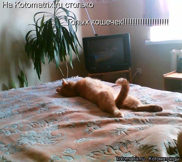 Котоматрица: На Kotomatrix.ru столько  Голых кошечек!!!!!!!!!!!!!!!!!!!