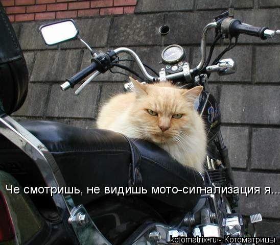 Котоматрица: Че смотришь, не видишь мото-сигнализация я...