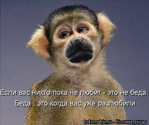Котоматрица: Если вас никто пока не любит - это не беда. Беда – это когда вас уже разлюбили.