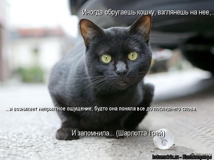 Котоматрица: Иногда обругаешь кошку, взглянешь на нее,...  ...и возникает неприятное ощущение, будто она поняла все до последнего слова.  И запомнила... (Шарл