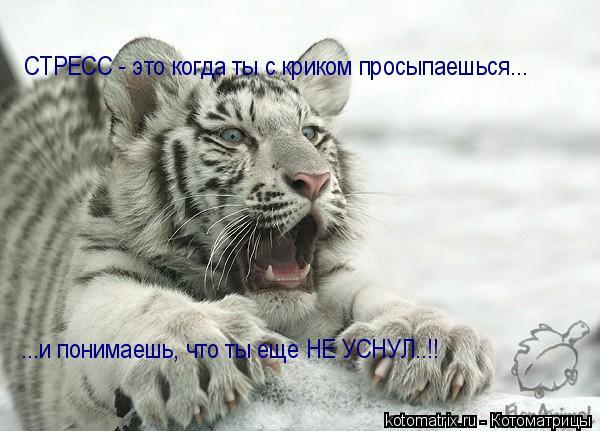 Котоматрица: СТРЕСС - это когда ты с криком просыпаешься... ...и понимаешь, что ты еще НЕ УСНУЛ..!!