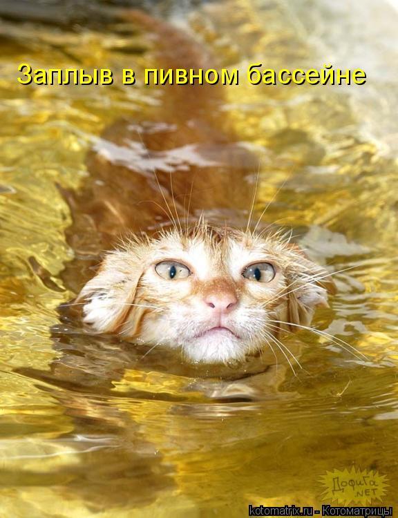 Котоматрица: Заплыв в пивном бассейне