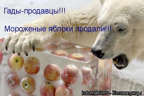 Котоматрица: Гады-продавцы!!! Мороженые яблоки продали!!!